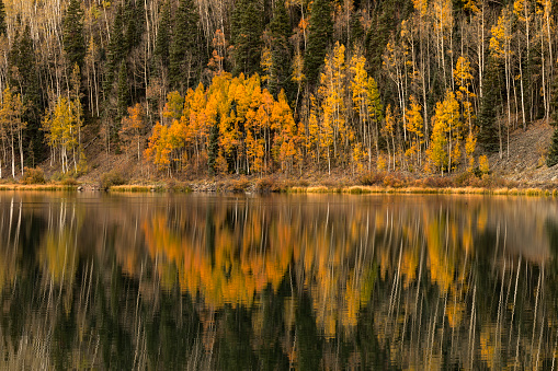Uncompahgre National Forest「Aspen trees in fall reflecting on Crystal Lake at sunrise」:スマホ壁紙(1)