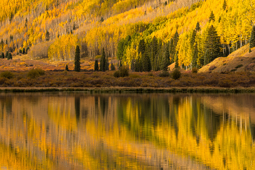 Uncompahgre National Forest「Aspen trees in fall reflecting on Crystal Lake at sunrise」:スマホ壁紙(16)