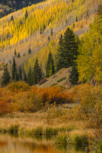 Uncompahgre National Forest「Aspen trees in fall along Crystal Lake at sunrise」:スマホ壁紙(11)