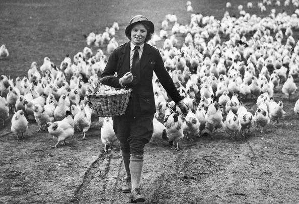 Farm「Chicken Woman」:写真・画像(17)[壁紙.com]