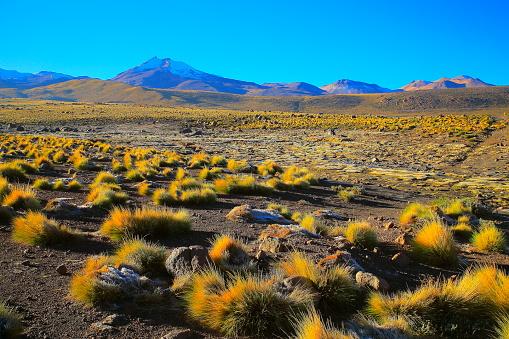 綺麗「チリのアンデス山脈アルティプラーノと火山、牧歌的なアタカマ砂漠、雪の火山性草原プナ風景パノラマ-アントファガスタ、チリのアンデス山脈の地域のチリ、Bolívia、アルゼンチン国境」:スマホ壁紙(13)
