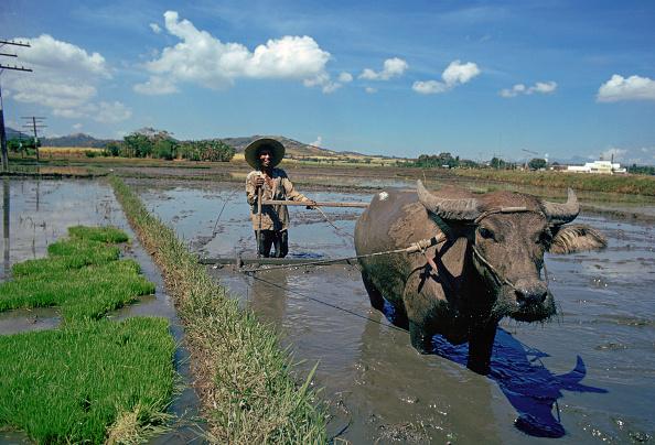Effort「Water Buffalo, Pakistan」:写真・画像(9)[壁紙.com]