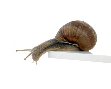 snails「Normalsnail」:スマホ壁紙(0)