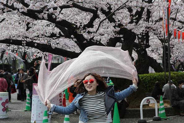 桜「People Enjoy Cherry Blossoms In Tokyo」:写真・画像(15)[壁紙.com]