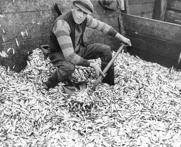 Fisherman「Shovel And Sprats」:写真・画像(13)[壁紙.com]