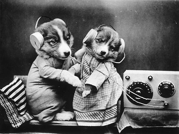 Revelling Pups:ニュース(壁紙.com)