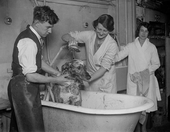 Toilet「Doggy Bath」:写真・画像(9)[壁紙.com]