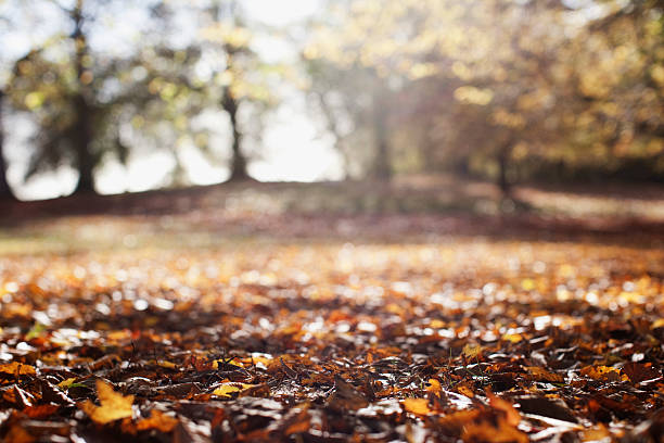 Park clearing in autumn:スマホ壁紙(壁紙.com)