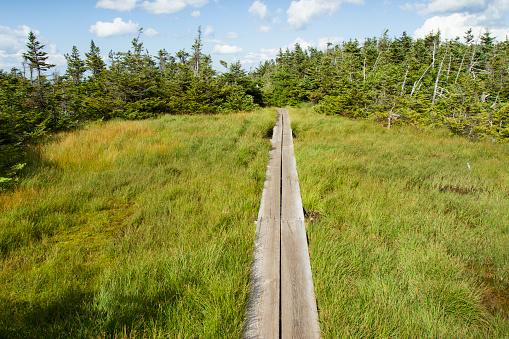 Adirondack Mountains「Hiking in the Adirondack Mountains」:スマホ壁紙(4)