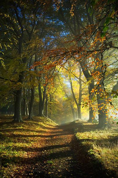 Path through autumn woods:スマホ壁紙(壁紙.com)