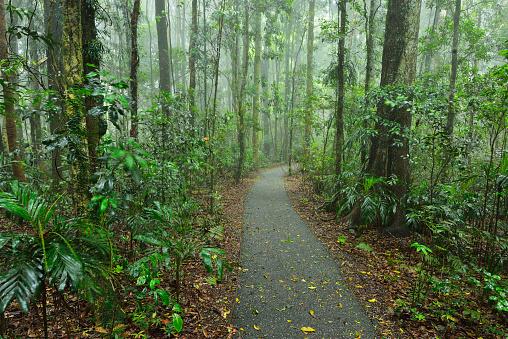 Empty Road「Path through Rainforest」:スマホ壁紙(9)