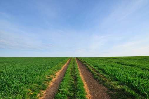 一本道「Path through Fields」:スマホ壁紙(19)