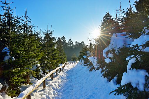Harz Mountain「Path through Coniferous Forest  in Winter with Sun, Altenau, Harz, Lower Saxony, Germany」:スマホ壁紙(12)