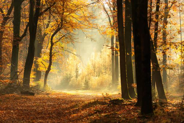 Path through a misty forest during a beautiful foggy autumn day:スマホ壁紙(壁紙.com)