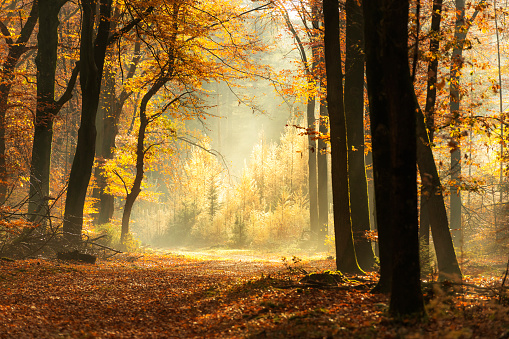 Beauty In Nature「Path through a misty forest during a beautiful foggy autumn day」:スマホ壁紙(12)