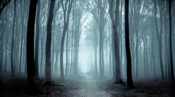 Path through a misty forest during a foggy winter day:スマホ壁紙(壁紙.com)
