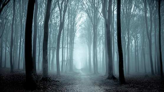 Deciduous tree「Path through a misty forest during a foggy winter day」:スマホ壁紙(1)
