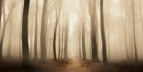 Deciduous tree「Path through a misty forest during a foggy winter day」:スマホ壁紙(9)