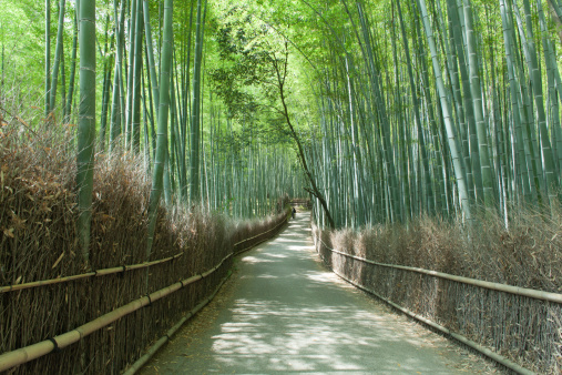 Bamboo Grove「Path through bamboo forest, Kyoto」:スマホ壁紙(12)