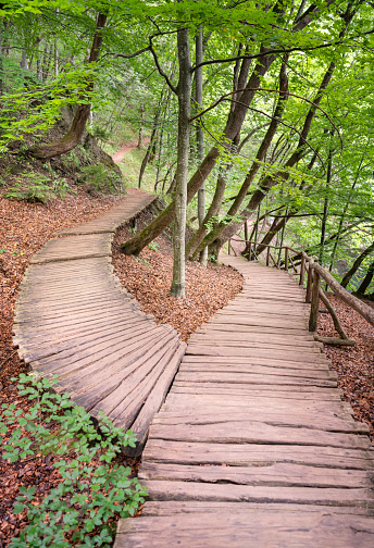 Footbridge「Path through a Forest splitting in two directions forming a Heart Shape in the middle」:スマホ壁紙(6)
