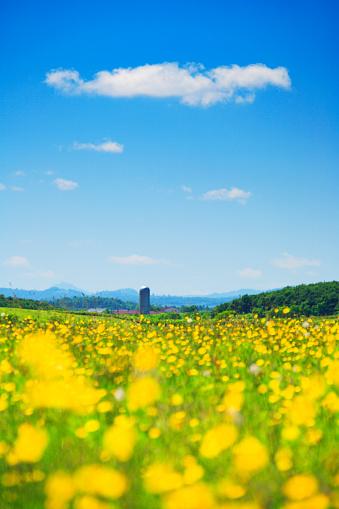 たんぽぽ「Dandelion and silo, Hokkaido Prefecture, Japan」:スマホ壁紙(12)