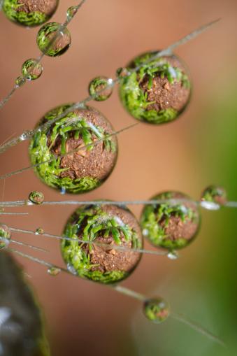 たんぽぽ「Dandelion and water droplets, California, USA」:スマホ壁紙(9)