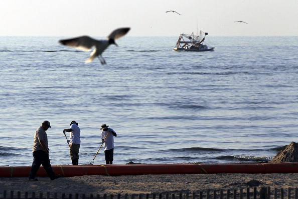 Sea Life「Gulf Oil Spill Spreads, Damaging Economies, Nature, And Way Of Life」:写真・画像(17)[壁紙.com]