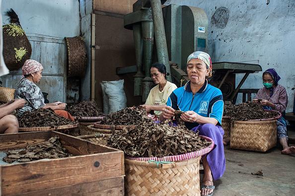 葉・植物「Workers Produce Handmade Cigars In Century Old Factory」:写真・画像(16)[壁紙.com]