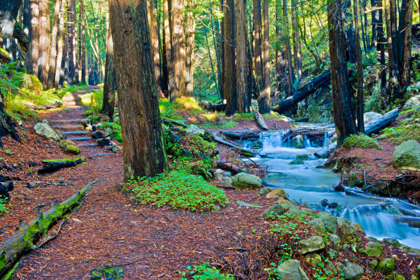 Limekiln Creek and Redwood Grove, Big Sur, California:スマホ壁紙(壁紙.com)