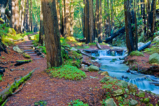Big Sur「Limekiln Creek and Redwood Grove, Big Sur, California」:スマホ壁紙(11)
