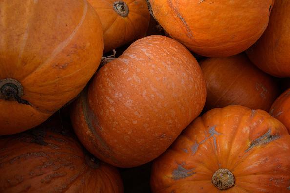 Pumpkin「Pumpkins Growing In Kent Fields Ahead Of Halloween」:写真・画像(16)[壁紙.com]