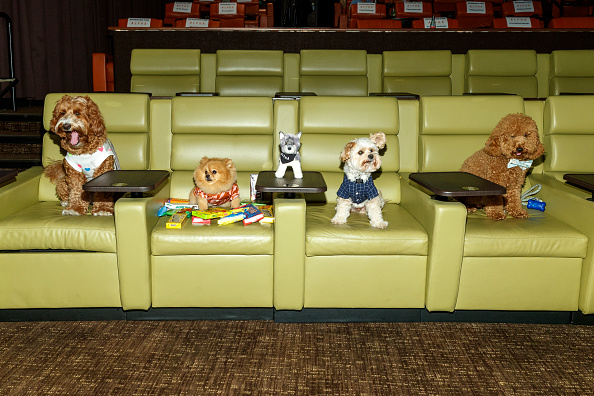 Influencer「ALPHA - Bring Your Own Dog (BYOD) Screening In LA」:写真・画像(9)[壁紙.com]