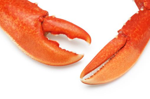 Claw「Lobster Claws」:スマホ壁紙(14)