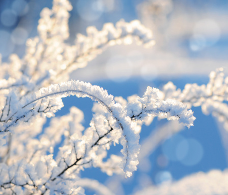 Snowdrift「Sunny snow-covered branches in front of clear blue sky」:スマホ壁紙(13)