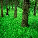 チャタフーチーオコニー国定森林壁紙の画像(壁紙.com)