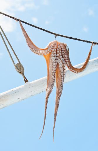 Photoshot「Greece, Cyclades Islands, Mykonos, Sun drying octopus on fishing boat」:スマホ壁紙(5)