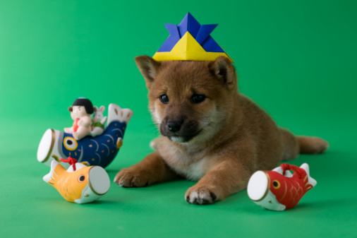 こどもの日「Shiba Puppy and Children's Day Celebration」:スマホ壁紙(1)
