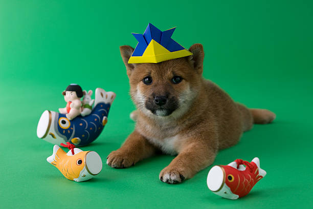 Shiba Puppy and Children's Day Celebration:スマホ壁紙(壁紙.com)