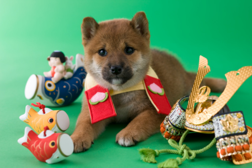 こどもの日「Shiba Puppy and Children's Day Celebration」:スマホ壁紙(4)