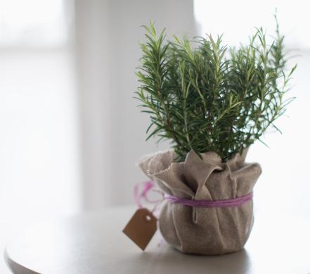 Rosemary「Rosemary」:スマホ壁紙(11)