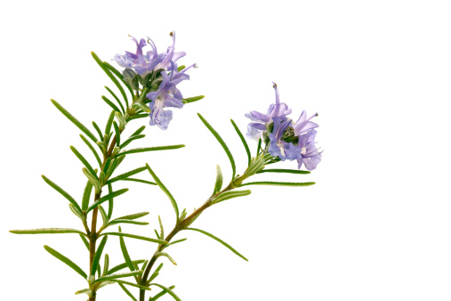 Rosemary「Rosemary」:スマホ壁紙(4)