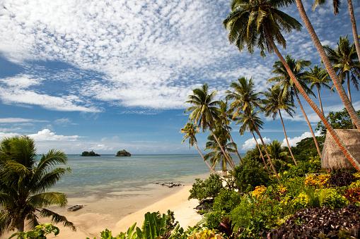 Ecosystem「Scenic Shoreline of Taveuni, Fiji」:スマホ壁紙(4)