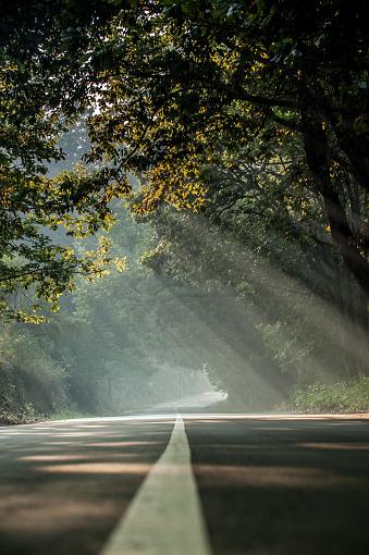 Beauty In Nature「林道上の木から落ちる太陽の光」:スマホ壁紙(6)