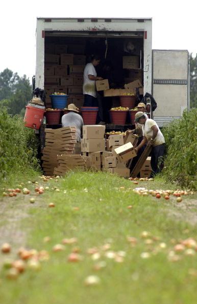 Naples - Florida「Migrant Farmers Pick Produce In South Georgia」:写真・画像(17)[壁紙.com]