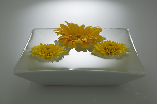 Floating On Water「Chrysanthemums and gerbera daisy floating in bowl of water」:スマホ壁紙(16)