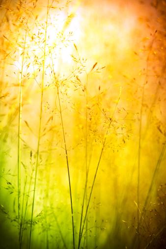 Wildflower「Wildflowers in meadow」:スマホ壁紙(1)