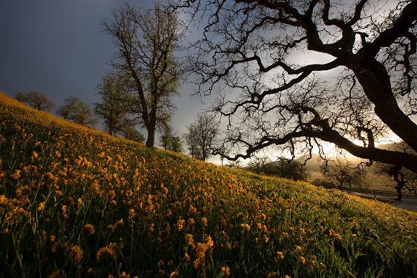 自生「Rare 'Super Bloom' Of Wildflowers Occurs In California Desert After Heavy Rain Falls」:写真・画像(9)[壁紙.com]
