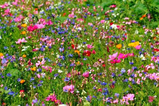 Bunt「Wildflowers」:スマホ壁紙(6)