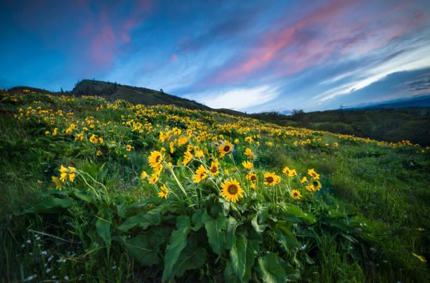 Wildflowers At Dawn:スマホ壁紙(壁紙.com)