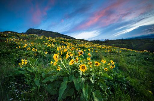 Basalt「Wildflowers At Dawn」:スマホ壁紙(9)